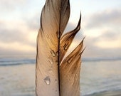 Feather - limited edition print of an original photograph