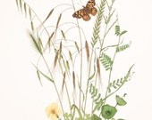 Painted Lady Butterfly with Grasses (Limited Edition Print)