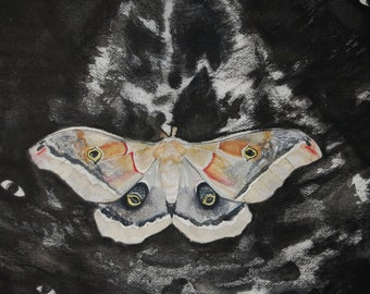 Moth charcoal and gouache painting