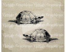 Turtles Instant clip art Graphic digital download image transfer for iron on burlap decoupage pillow paper tote bag No. gt427