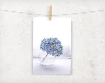 floral photography, botanical, hydrangea flower, blue white, california, summer, home decor, wall art
