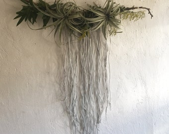 JOSHUA TREE Airplant and Moss Wall Hanging