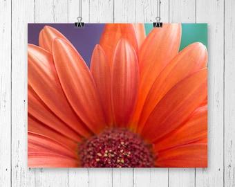 Daisy Print Orange Flower Print Daisy Art Print Flower Art Home Decor Nature Photography Flower Photography Daisy Wall Art