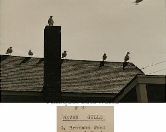 Seagulls birds on roof vintage art photo