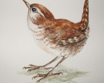 original watercolour Bird illustration, watercolour wren, British bird illustration