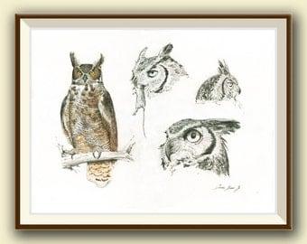PRINT- Great horned owl bird - bird of prey art- bird art print - painting watercolor - bird art nursery decor - Art Print by Juan Bosco
