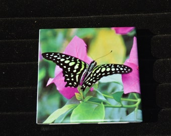 Tailed Jay Green Butterfly Coaster