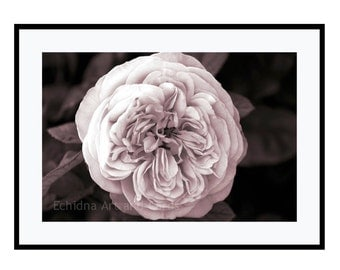 Wedding Shower Gift, Gift For Bride, Bridal Shower Gift, 20x30 Print, Fine Art Flower Photography, Botanical Print, Flower Print Wall Art