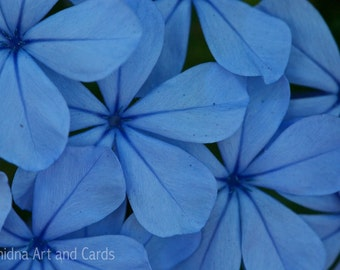 Large Botanical Photography, Large Blue Wall Art, Flower Photography, Peaceful Art Print