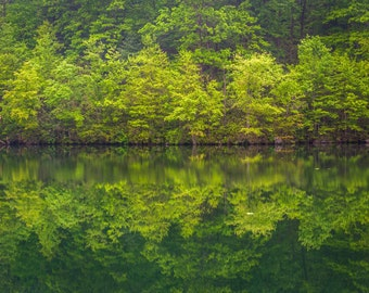Trees reflecting in Prettyboy Reservoir in Baltimore County, Maryland.   Photo Print, Stretched Canvas, or Metal Print.