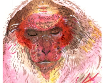 stump tailed macaque giclee print