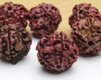 Genuine Mukhi Rudraksha Beads 15x20mm 2pcs