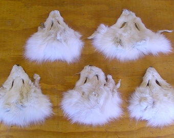 5 #1 Artic Fox Faces. Professionally Tanned.