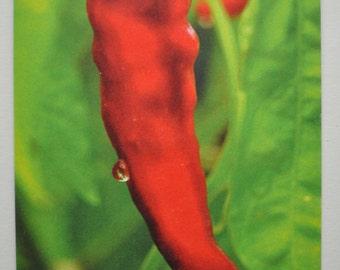 Cayenne Photo Hemp Card