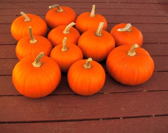 Pumpkin Seeds - SUGAR PIE - Excellent for Baking - Bulk - 50 Organic Seeds