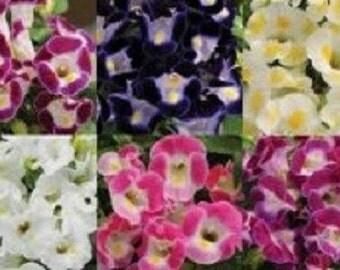 20+ Torenia Wishbone Mix / Annual Flower Seeds