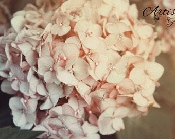 Hydrangeas photo flower soft cream pink Cottage Chic Nature Decor Nature Photography Floral Art Wall Art Home decor Dreamy floral art summer