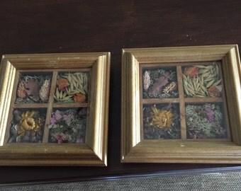 Vintage Wood Framed Flora Under Glass From Ireland