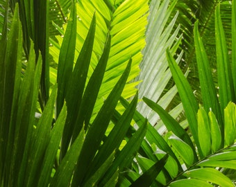Tropical palms nature photography print.