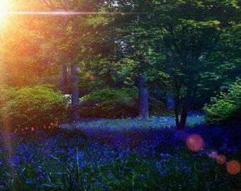 Sunlight and Bluebells