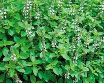 Marjoram - Herb- 100 Seeds