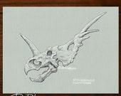 3 Dinosaur skull illustrations