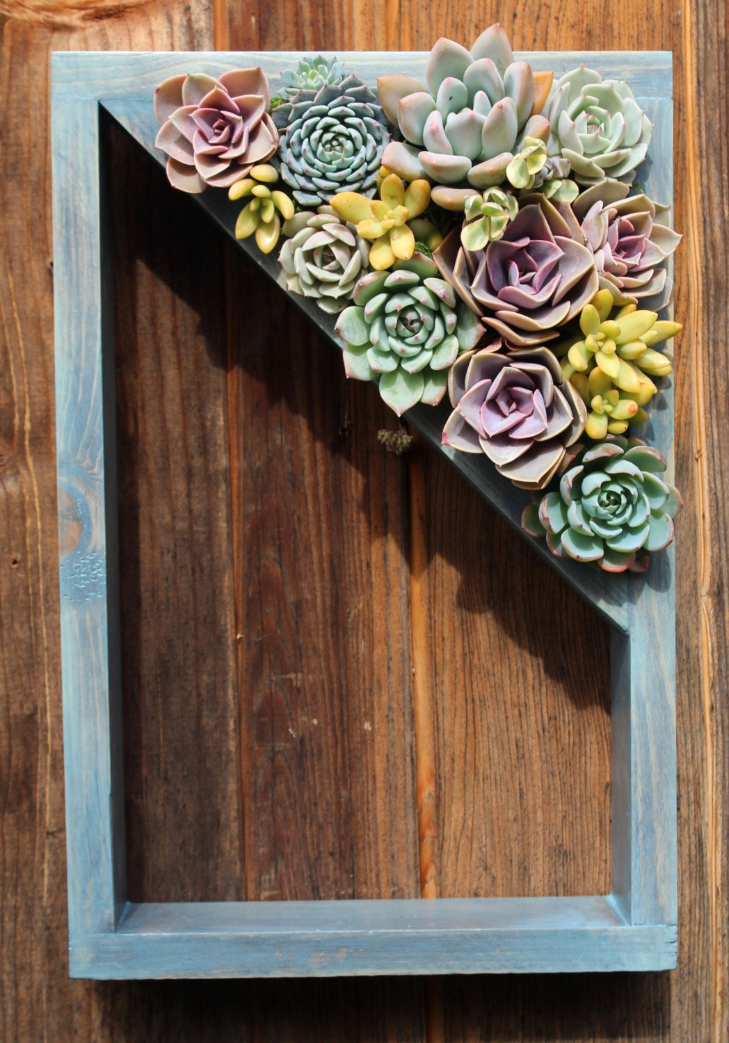 Shelf Vertical Planter Succulent Garden 15 By
