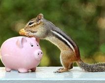 Chipmunk Print, Funny Animal Art, Cute Animals, Piggy Bank, Animal Poster, Nature Prints