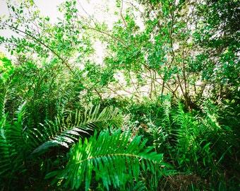 Florida Leaves