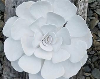 White clay echeveria succulenta