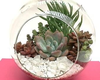 Terrarium-XL Succulent Terrarium Kit-Succulent DIY Kit-Housewarming Gift-Glass Terrarium kit-Miniature Garden-Garden Gift-Gift for Her