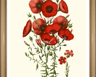 "Red Flower Print. Flax Print. Botanical Print.  5x7"" 8x10"" 11x14"""
