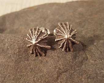 Micro Limpet Shell Earrings