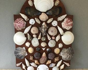 Vintage shell collection | rare seashell collection | vintage shell collection | Florida souvenir | vintage shell collection | old seashells