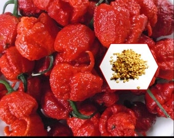 World's Hottest Chili Peppers The Carolina Reaper 10 Seeds and DIY Growing Instructions
