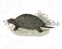 Vintage Turtle, Tortoise, Terrapin,  DIGITAL IMAGE Download,  .png and .jpeg, transfer to burlap, totes, designs, collages and more