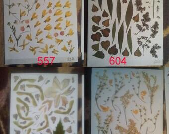 Pressed flowers, dried flowers, pressed leaves, dried leaves, pressed petals, dried petals, Oshibana supplies #557 #604 #876 #740