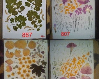 Pressed flowers - pressed leaves - pressed petals - botanical - #887 #807 #221 #808