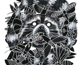 Raccoon (Print)