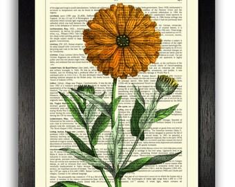 WALL ART Marigold Flower Print Poster, 8 x 10 Artwork Botanical Print, Orange Flower Wall Decor, Kitchen Wall Art, Girlfriend Gift, Home Art