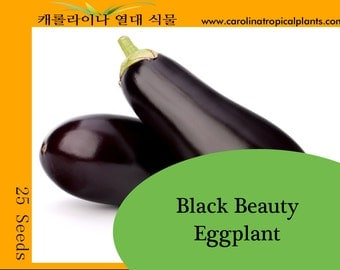 Eggplant, Black Beauty seeds - 25 Seed Count
