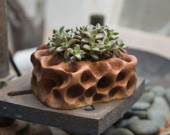 Flower pot / succulent