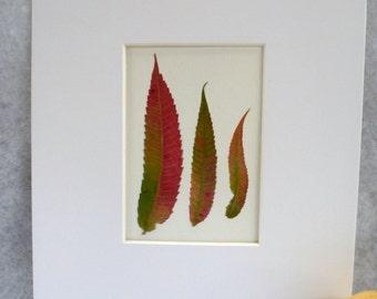 Real Pressed Smooth Sumac Leaf Botanical Herbarium Specimen Art 11 x 14  with Mat