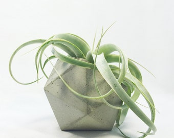 Icosahedron Concrete Planter (with or without drainage holes)