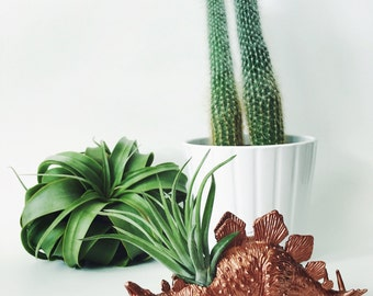 Small Copper Stegosaurus Dinosaur Planter Air Plant; Dinosaur Planter;  Home Decor; Air Plant; Unique Gift Idea; Desk Accessory; Tillandsia