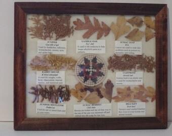 "Navajo Medicine Chart, Natural Herbs Display 11"" x 9"", Framed Under Glass."