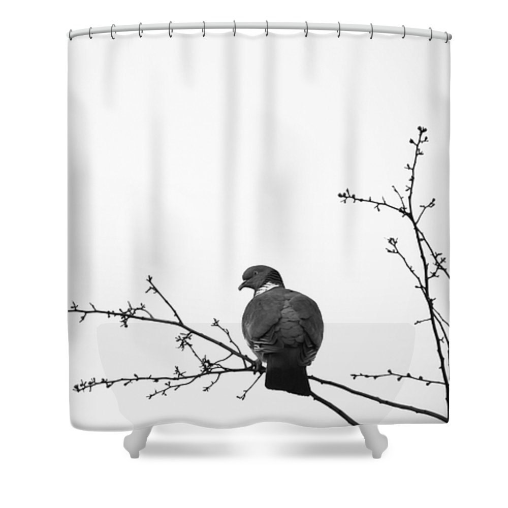 Bird Shower Curtain Black And White Pigeon Art Shower