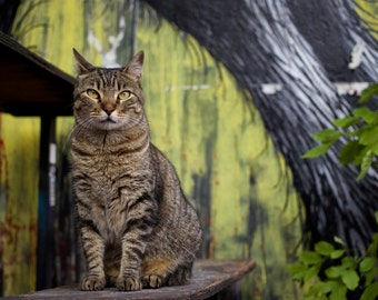 Cat in Buenos Aires, Street Photography, Cat Photo, Stray Cat, Styrene Print