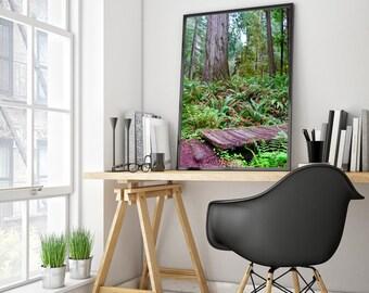 Redwood Forest Secret Garden Bridge Ferns & Trees - Framed Canvas Print - Fine Art Photography (Moss, Wild, Tall) 20x30 Print