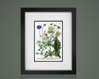 BOTANICAL PRINT - Free Shipping - Matted And Framed botanical Print, Gallery Wall Art, Framed Antique Print, Black Or  White Frames
